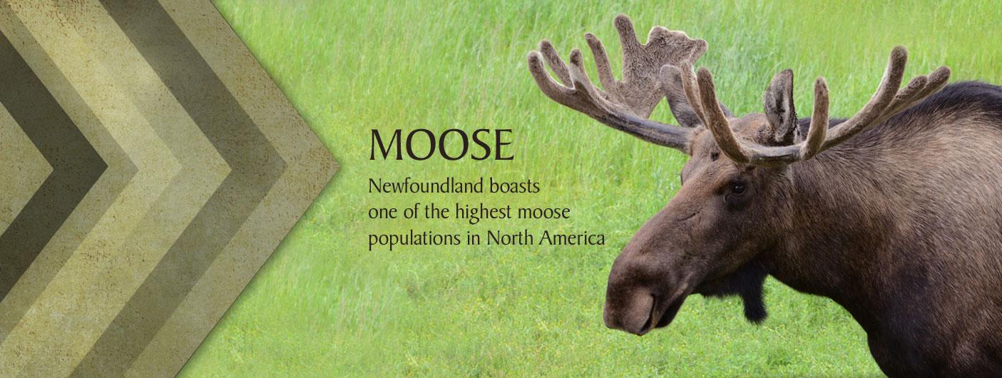 2_web_moose